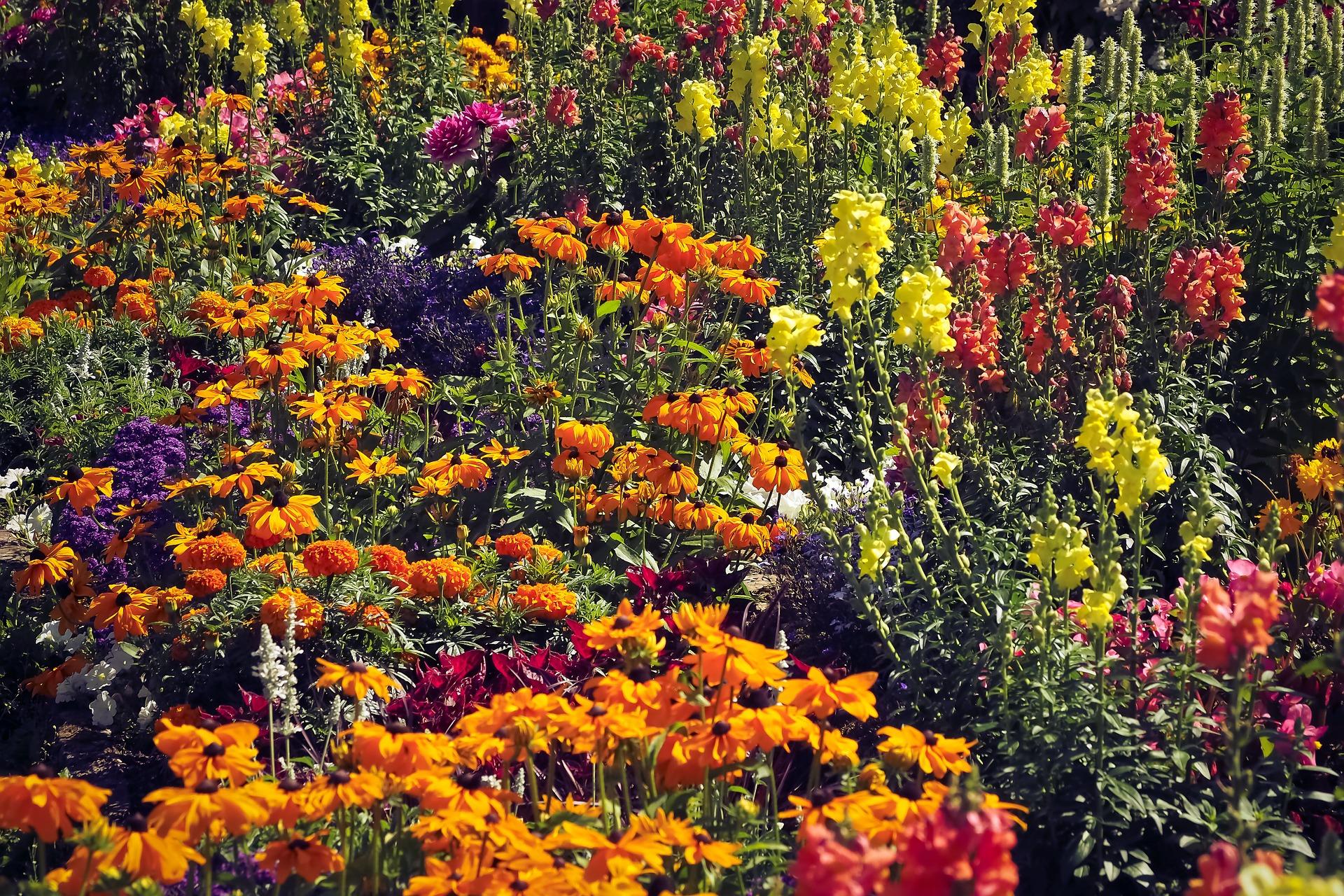 En blomstrande äng med mycket blommor i olika former och färger
