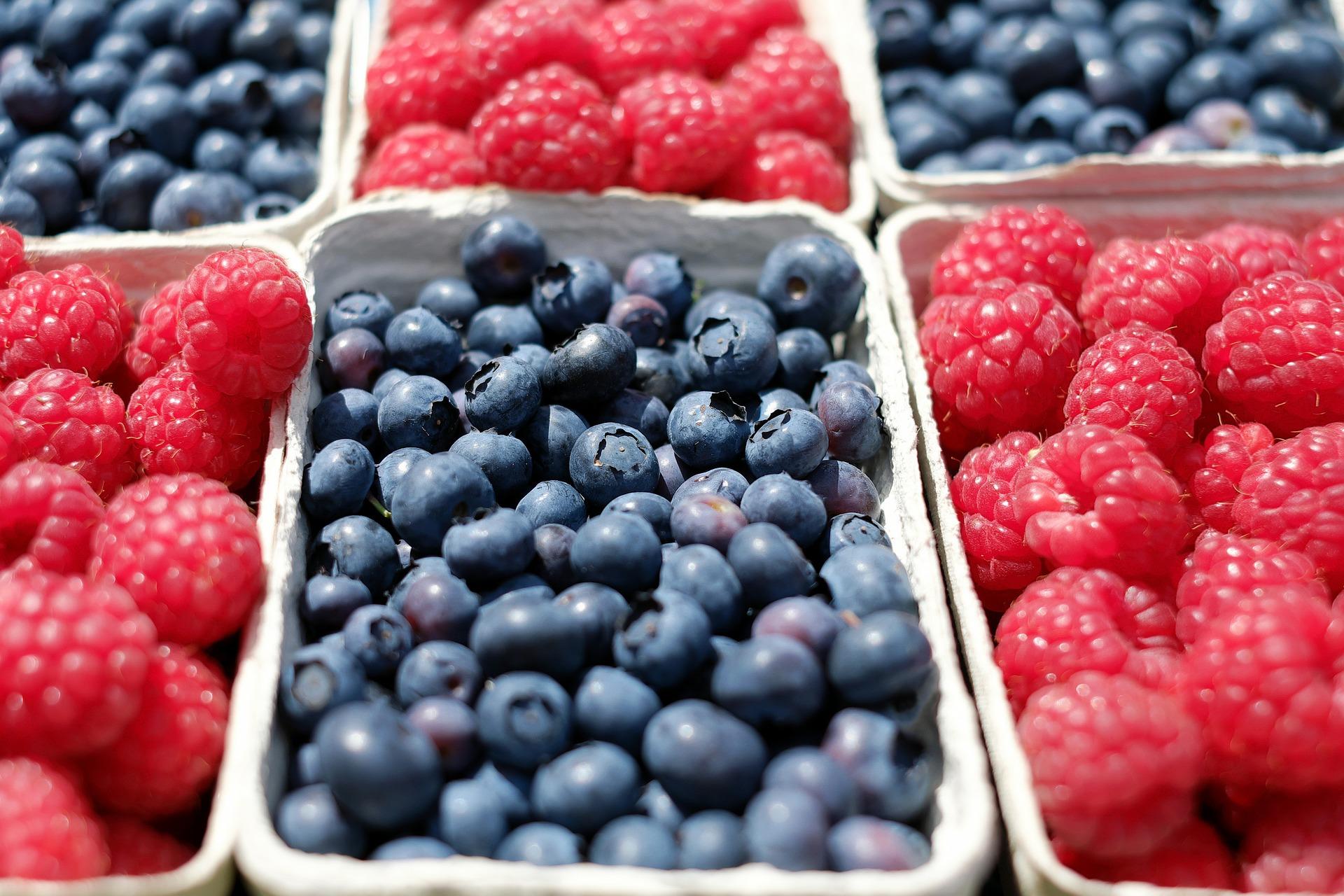 Hallon och blåbär fördelade i olika tråg uppställda i ett rutigt mönster