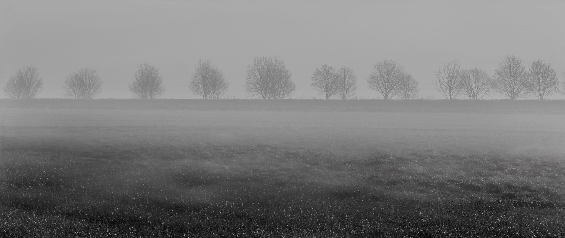 Träd utan löv i dimma