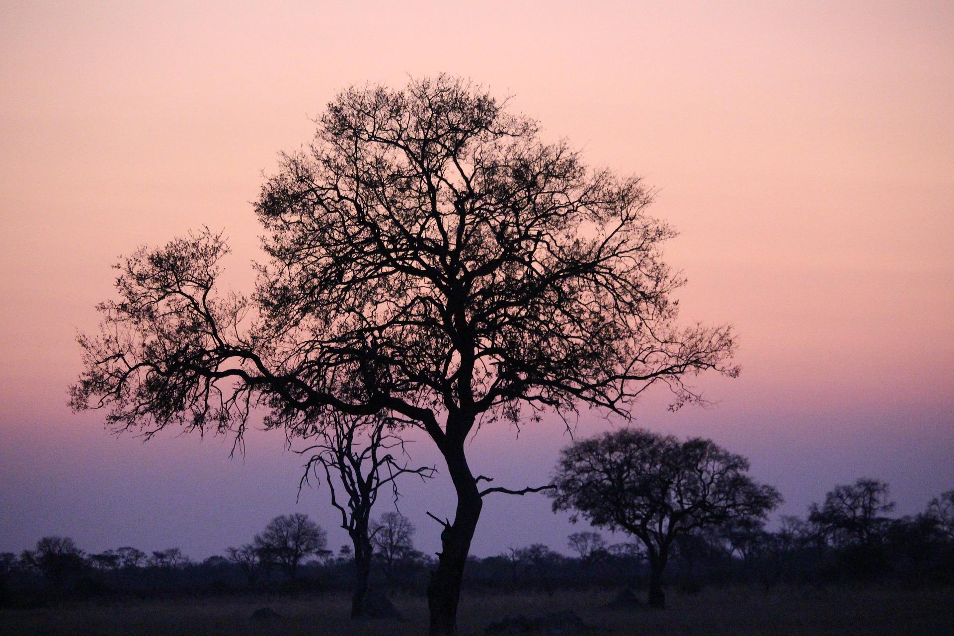 Siluett av ett träd i solnedgång med en blårosa himmel